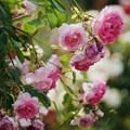 Photos: 愛を込めて花束を