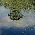Photos: 6月21日 青い空と白い雲と緑の木