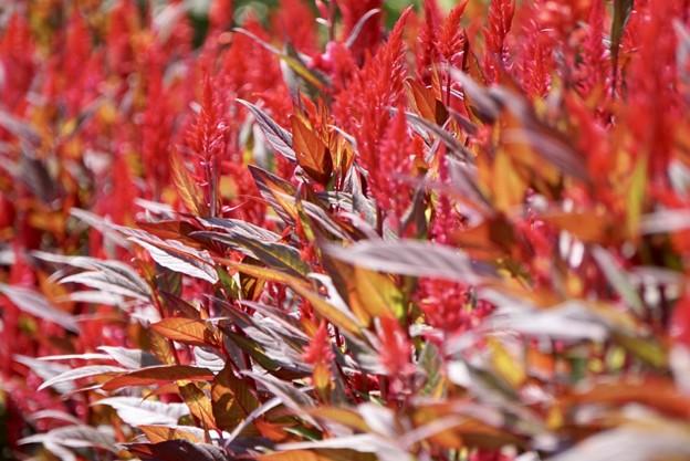 カラフル~Leaf~