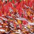 Photos: カラフル~Leaf~