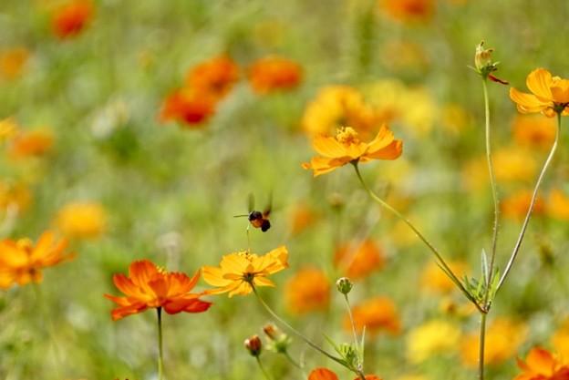 蜂も秋めいて