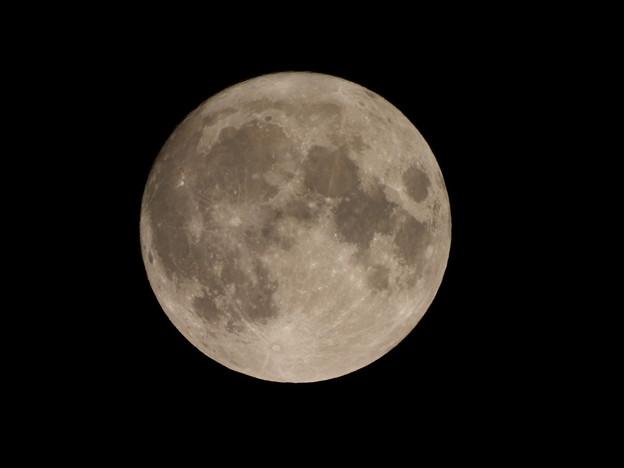 15夜お月様