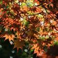 陽気に笑う春の紅葉