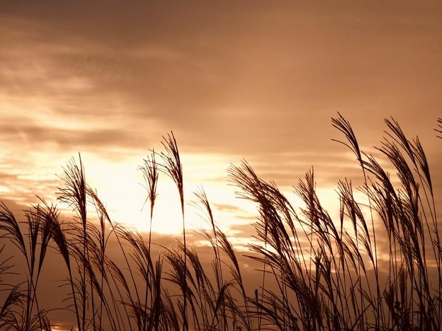 夕陽に染まるカルスト大地のススキ