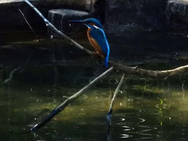 煌めくトンボ池