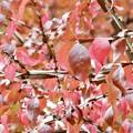 Photos: 秋の葉