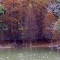 Photos: もう紅葉も、終わりカモ!?
