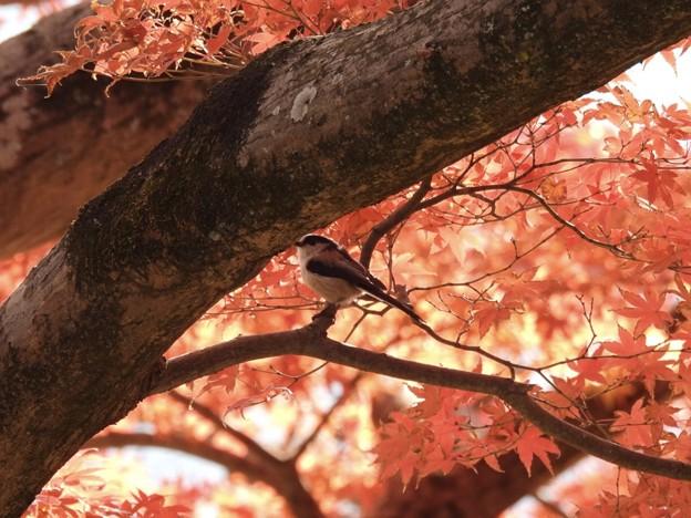 Photos: 大きなモミジの木の下で~♪