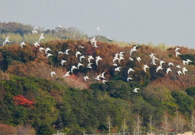 秋の終わりに、渡り鳥