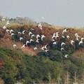 Photos: 秋の終わりに、渡り鳥