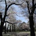 Photos: 日野中央公園1