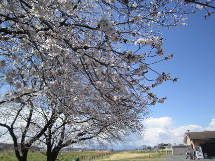 Photos: 穏やかな春