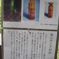 Photos: 韮山竹と千利休の解説版