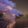 写真: ライトアップと桜水面