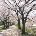 石手川緑地3