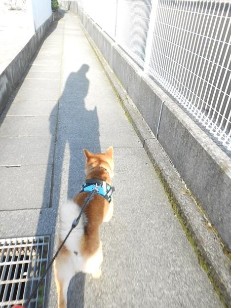 午前中に通った道を・・・
