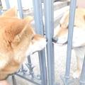 写真: 一緒に遊びたいね~!