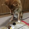 Photos: ちゃんと待ってるね~!
