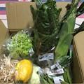 野菜の玉手箱!?