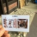 Photos: 柴々団団員証
