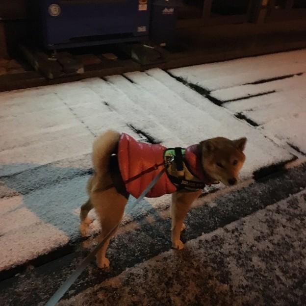 雪積もってました!
