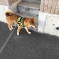 Photos: ご機嫌に散歩