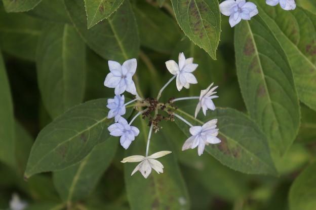 小さくて可愛い花です