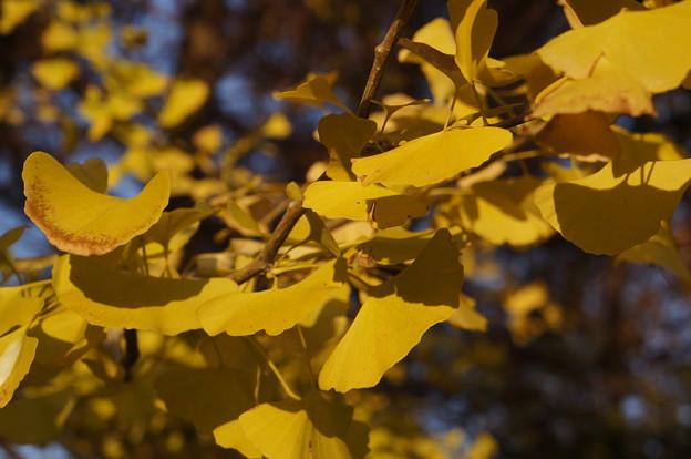 黄色がきれいでした