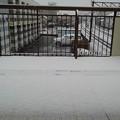 Photos: ベランダの雪