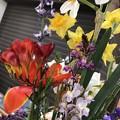 Photos: 花いろいろ