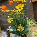 Photos: 久しぶりに花が飾ってありました