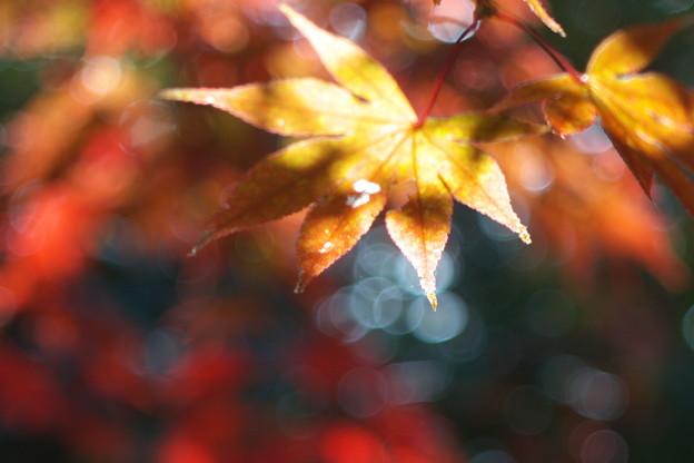秋に溶ける
