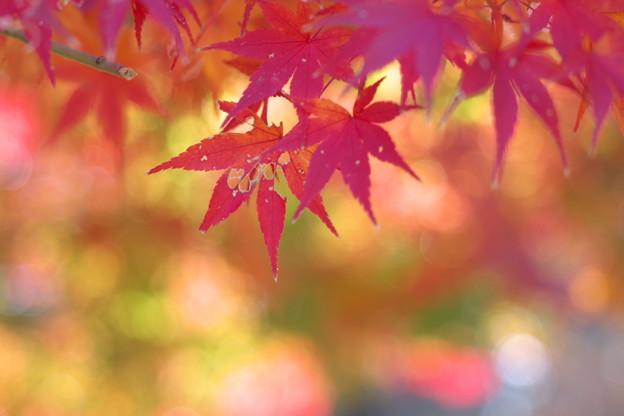 秋の虫喰み