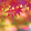 Photos: 秋の虫喰み