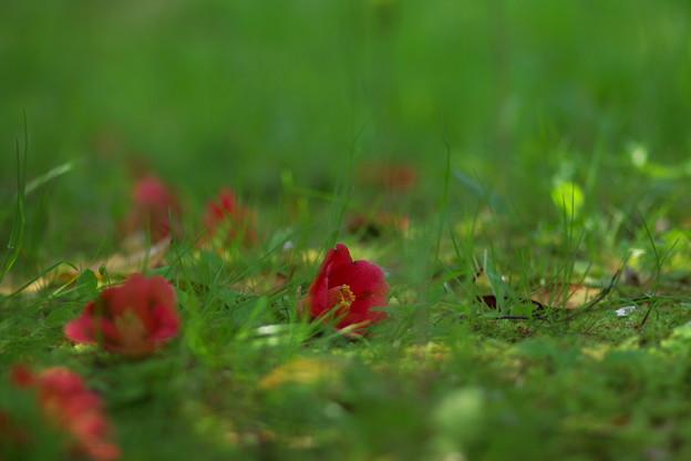 春の朽ちる音