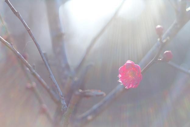 Photos: 木の花