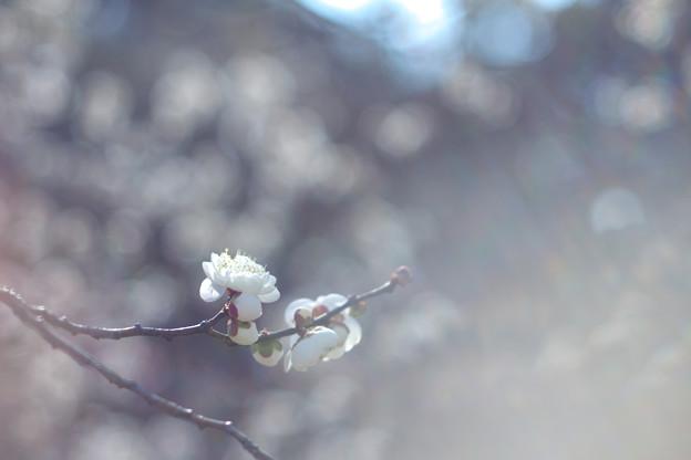 Photos: 白光