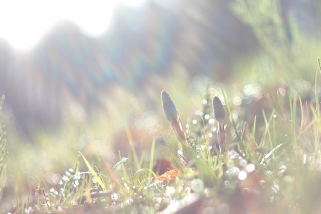 Photos: 朝の光