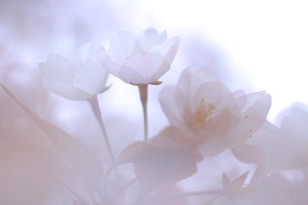 Photos: 春の行方