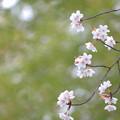 Photos: 見上げる春