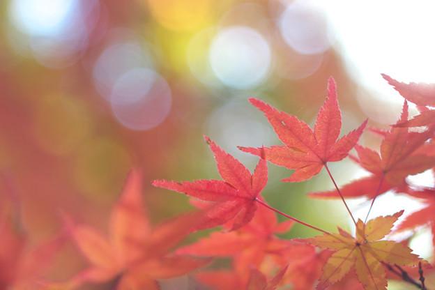 Photos: 綾錦