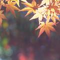Photos: 暮秋