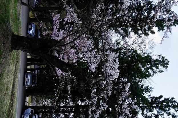 Photos: 写真00059