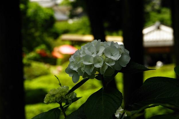写真00465