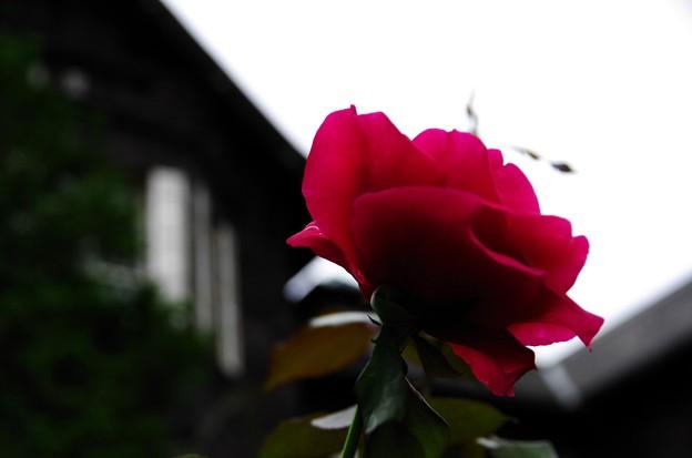 写真00101 (2)