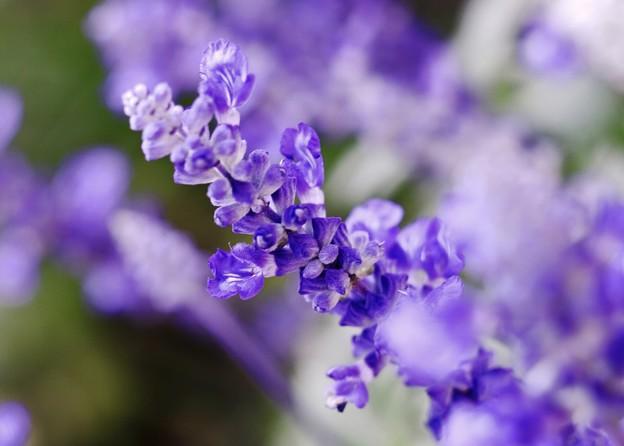 蒼い香り blue-notes 12