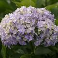 蒼い香り blue-notes 18