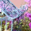 PINK/Petunia