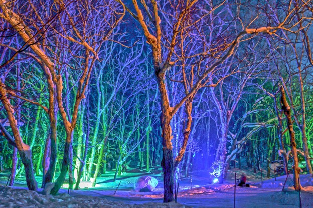 雪あかりの路/森のライトアップ