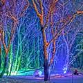 写真: 雪あかりの路/森のライトアップ